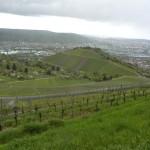View into Stuttgart from grape fields