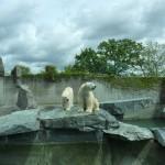 Happy Polar Bears Smiling Happily
