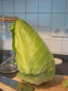 Cone-head Cabbage