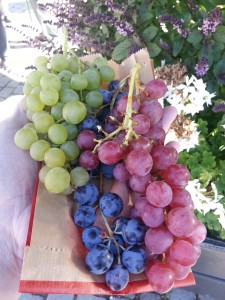 All The Grapes
